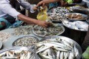 পদ্মা ও বিলের মাছে একাকার রাজশাহীর মাছ বাজার