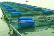 ভাসমান খাঁচায় মাছ চাষে দিনবদলের হাতছানি