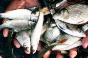 মিশ্র মাছ চাষে পুকুর নির্বাচ করনীয়ঃ